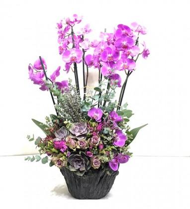 Sabuncakis Serisi 6 Dallı Mor Orkide