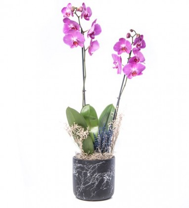 Mor Orkide Tasarım