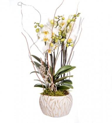 Edition Serisi Buket Beyaz Orkide Tasarım