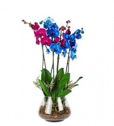 Mavi-Pembe Orkide Tasarım