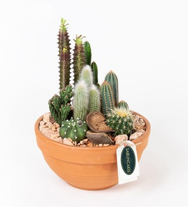 Meksika XL