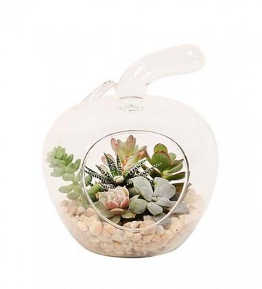 Elma Vazo da Succulent Tasarımı
