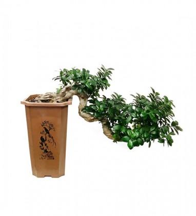 Saksıda Kalıcı Topraklı Bonsai VIP