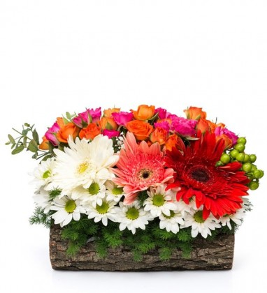 Kütükte Çiçek Bahçesi