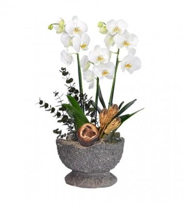 Dekoratif Sütlü Kahve Eskitme Saksı Orkide