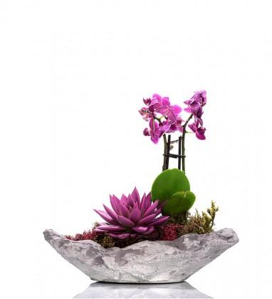 Kayık Saksıda Orkide ve Sukulent Bahçesi