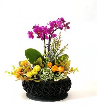 Mini Orkide Bahçesi