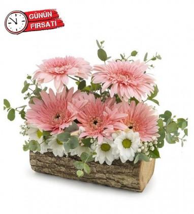 Kütükte Kır Çiçekleri