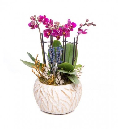 Masal Mini Mor Orkide