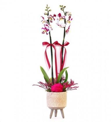 Ayaklı Desenli Saksıda Çift dallı Orkide