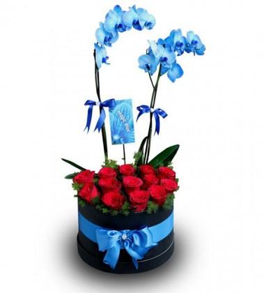 Mavi Orkide Kutuda Kırmızı Güller