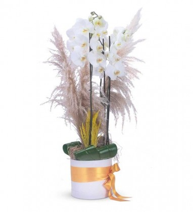 Sabuncakis Beyaz Orkide Tasarımı