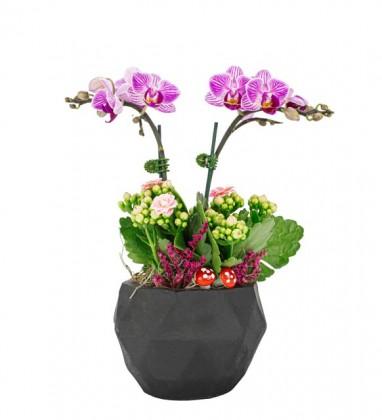 Büyük Aşk Mini Orkide Kalonche