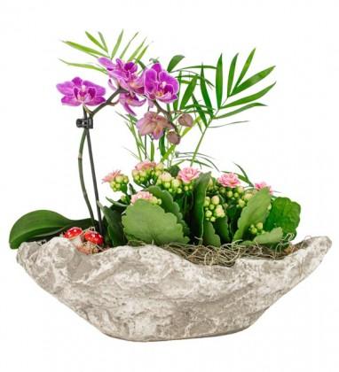Orkide-Kalanşo ve Kamadora Tasarım