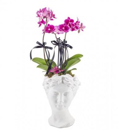 Heleni Orkide Tasarımı
