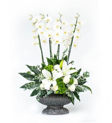 4 Dal Beyaz Orkide Aranjmanı