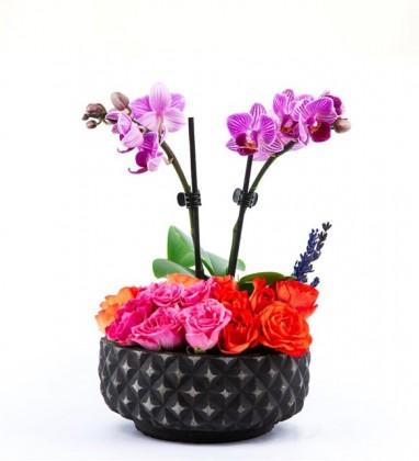 Renkli Çardak Güller Ve Mini Orkide