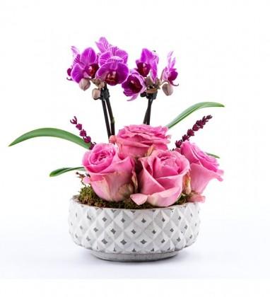 Pembe Gül Ve Mor Orkide