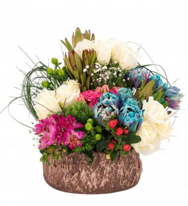Saksıda Taze Çiçekler Serisi